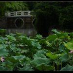 ECNU Lotus Pond (Zhongbei Campus)