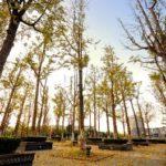 ECNU China Woods of Universities (Minhang Campus)